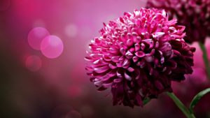 beautiful-flower-desktop-wallpapers